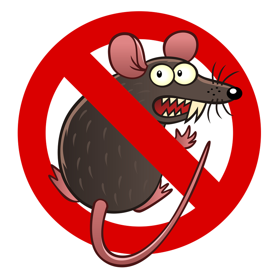 Rodent Damage coverage for your car in Tumwater, WA
