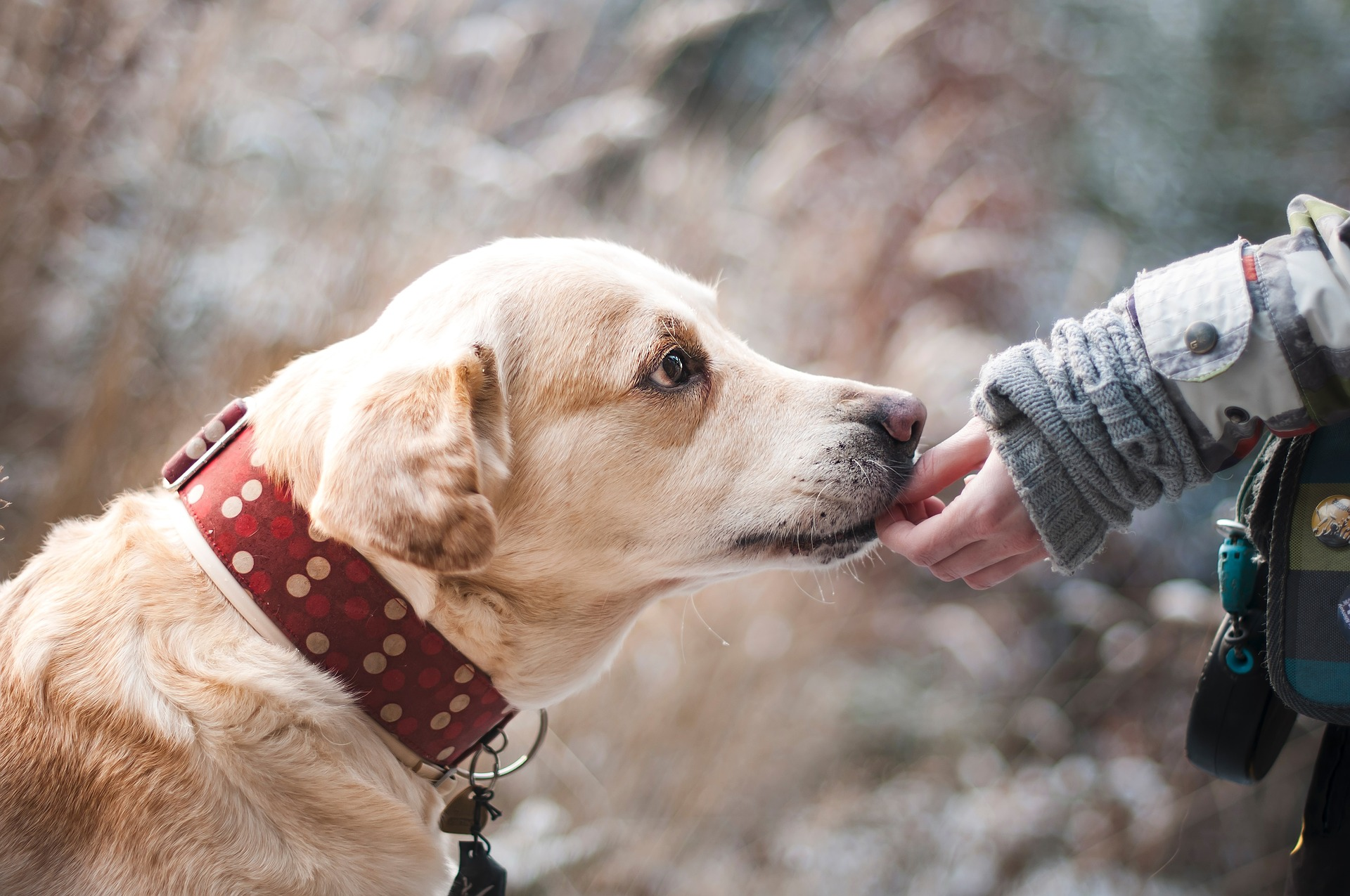 Liability Insurance for Dog Bite Claims Tumwater, WA